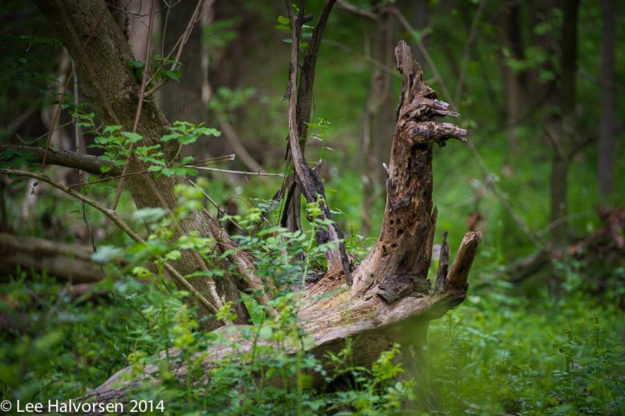 Log or Viking Long Boat