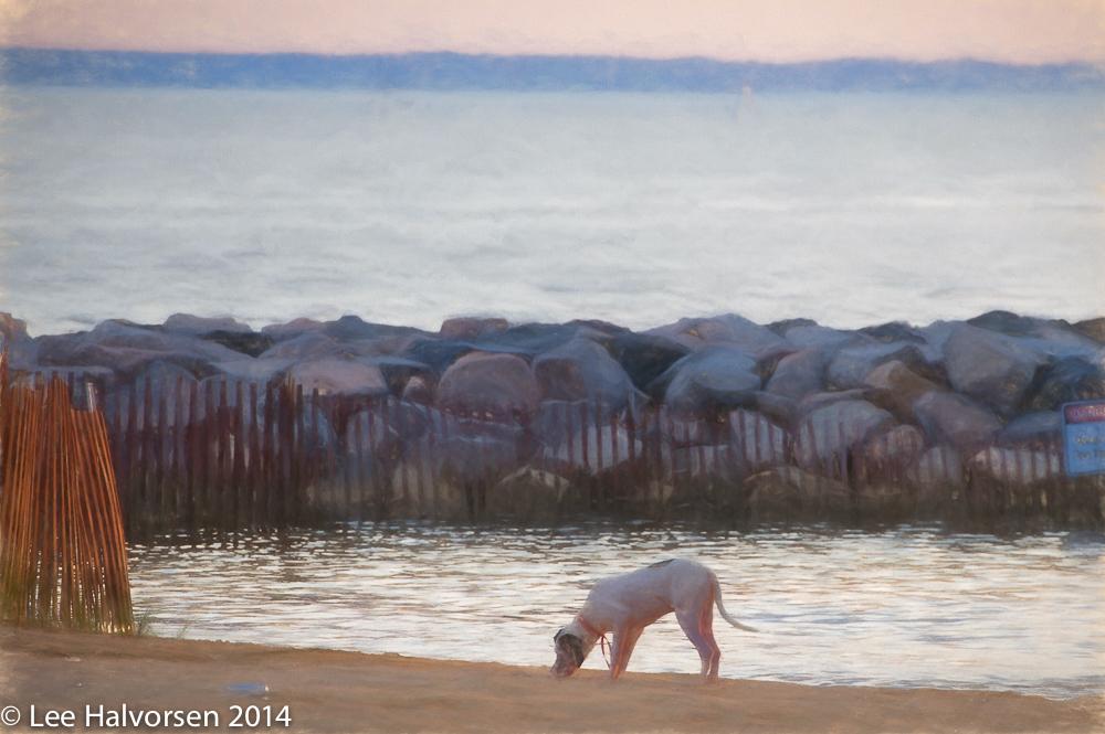Abstract Jamestown Dog On Beach