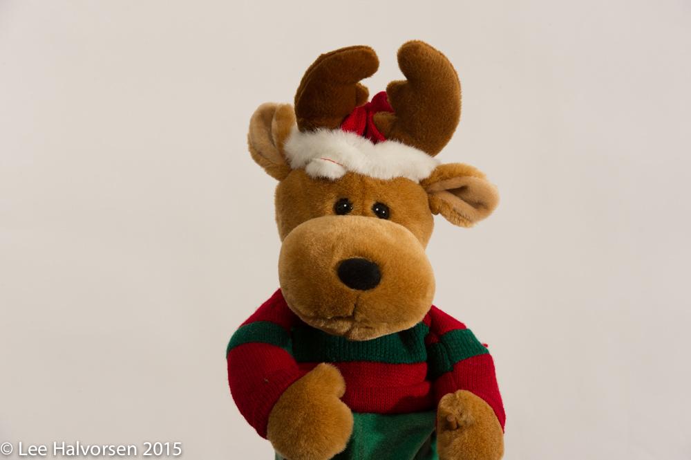 Posing Reindeer