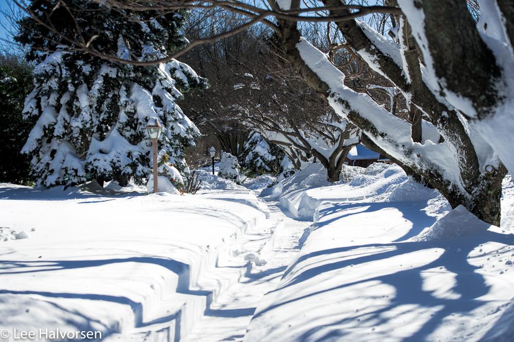 Snowbound Neighborhood