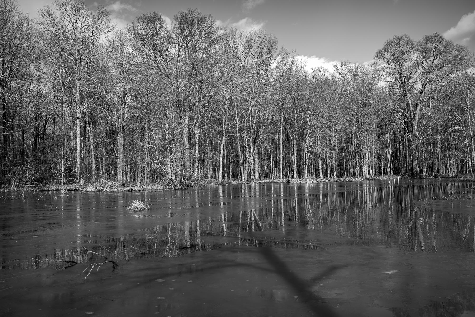 Frozen Huntley Meadows Park in February 2019