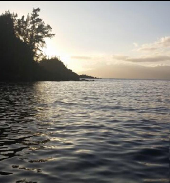 Wayne Dyer on Ocean