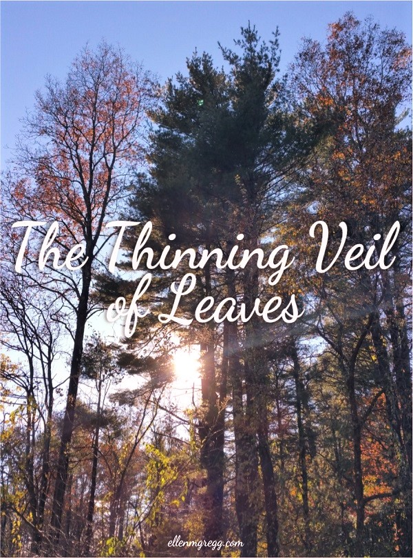 The Thinning Veil of Leaves ~ A blog post by Intuitive Ellen :: Ellen M. Gregg ~ #halloween #samhain #surrender #reveal