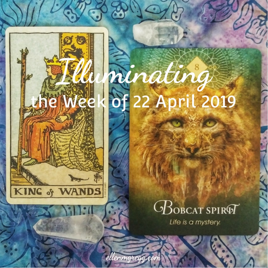 Illuminating the Week of 22 April 2019 ~ An intuitive card reading by Ellen M. Gregg :: Intuitive ~ #cardreading #oraclereading #tarotreading #knightofwands #bobcatspirit #thesoulways