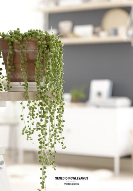 Best indoor plants to use
