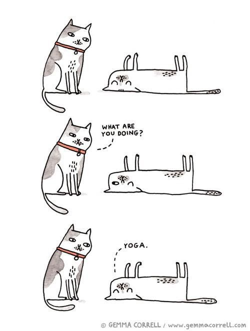 yoga, asana, dog and cat humour, animal humour, yoga humour, funny yoga