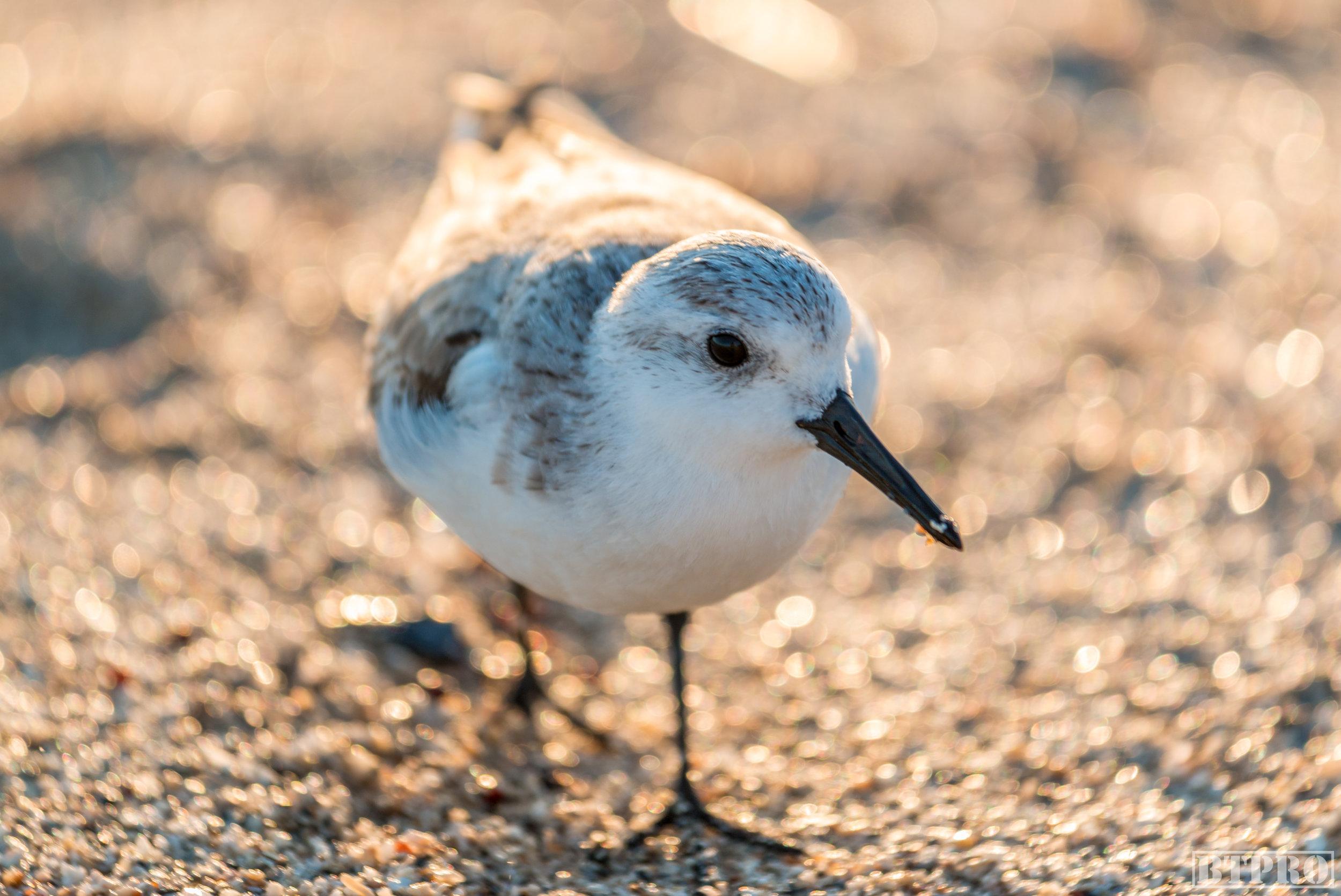 nature, nature photography, wildlife, wildlife photography, birds, bird photography, miami, miami wildlife