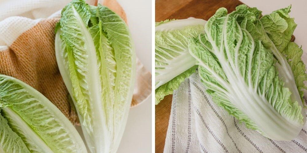 Napa Cabbage Vs Romaine Lettuce The Ultimate Veggie Showdown Hitchcock Farms