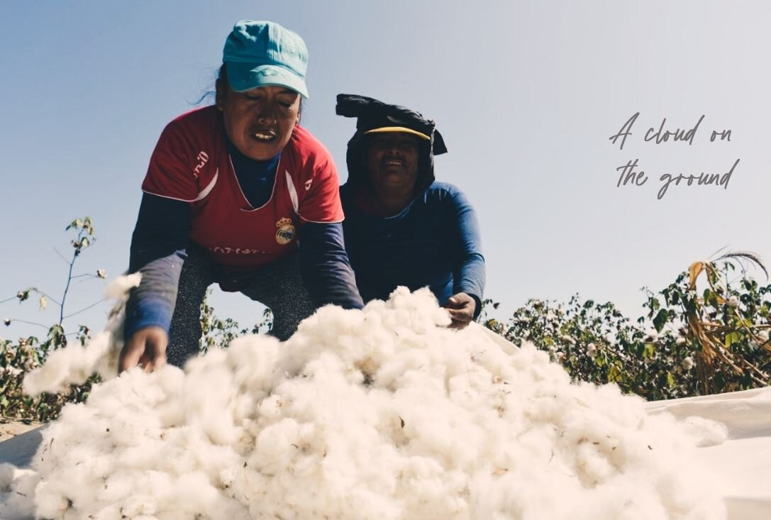 Blog - we start in the cotton fields- cloud on the ground.JPG