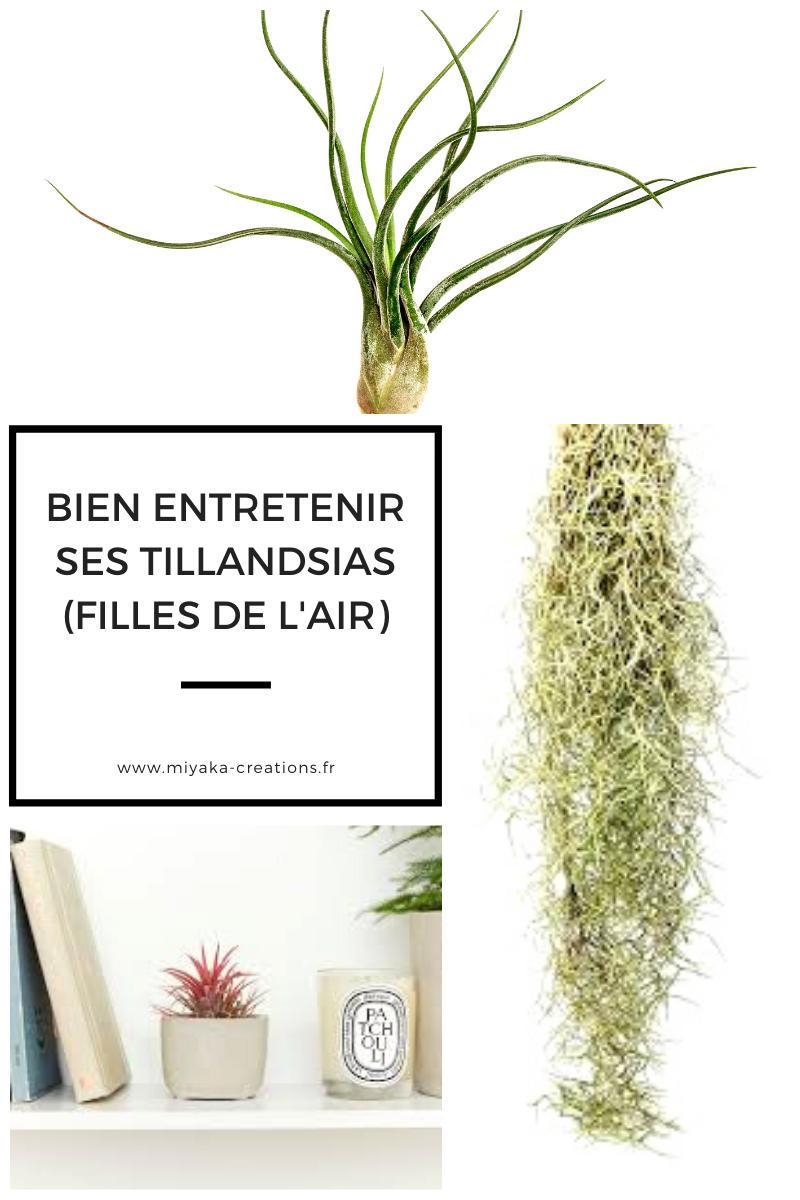 Les Filles De L Air Plante bromeliaceae — conseils et astuces pour vous occuper de vos