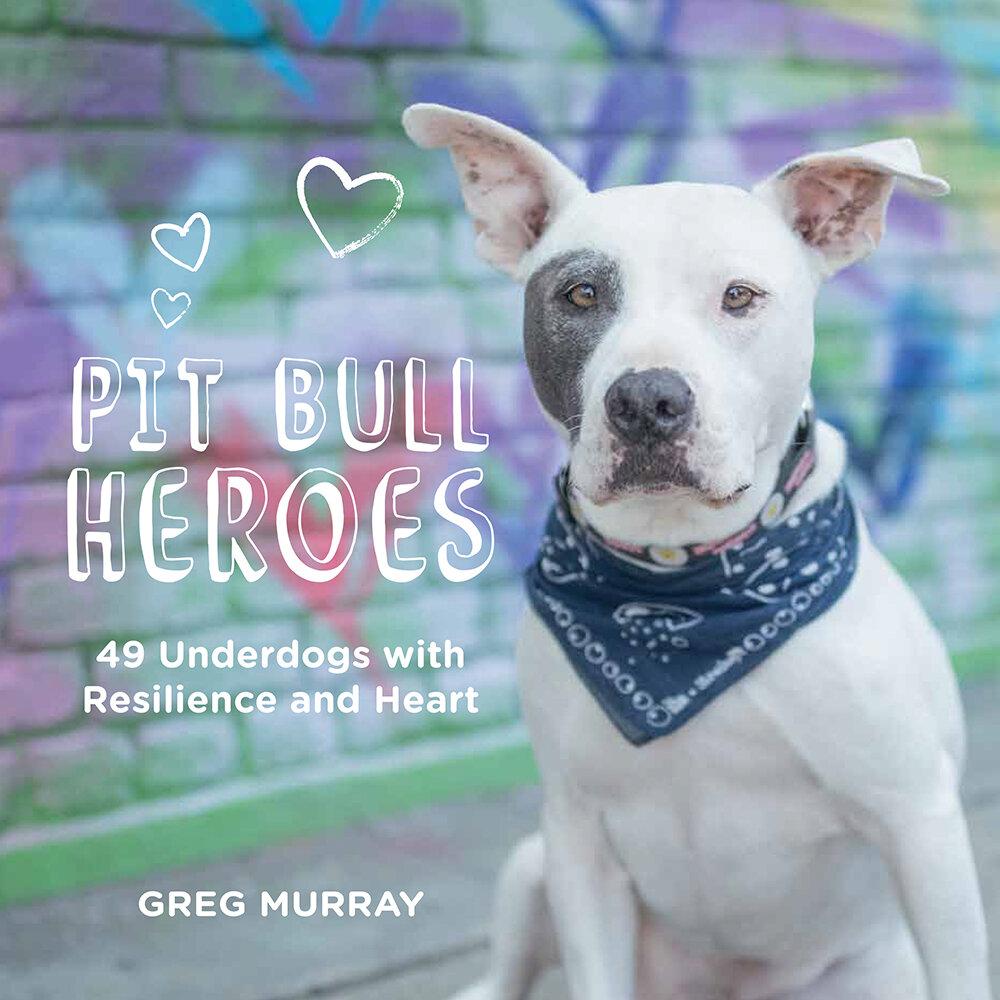 Bulls website pit Pitbull Puppies