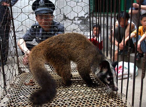 Wildlife animals are farmed to be sold in the wholesale market.