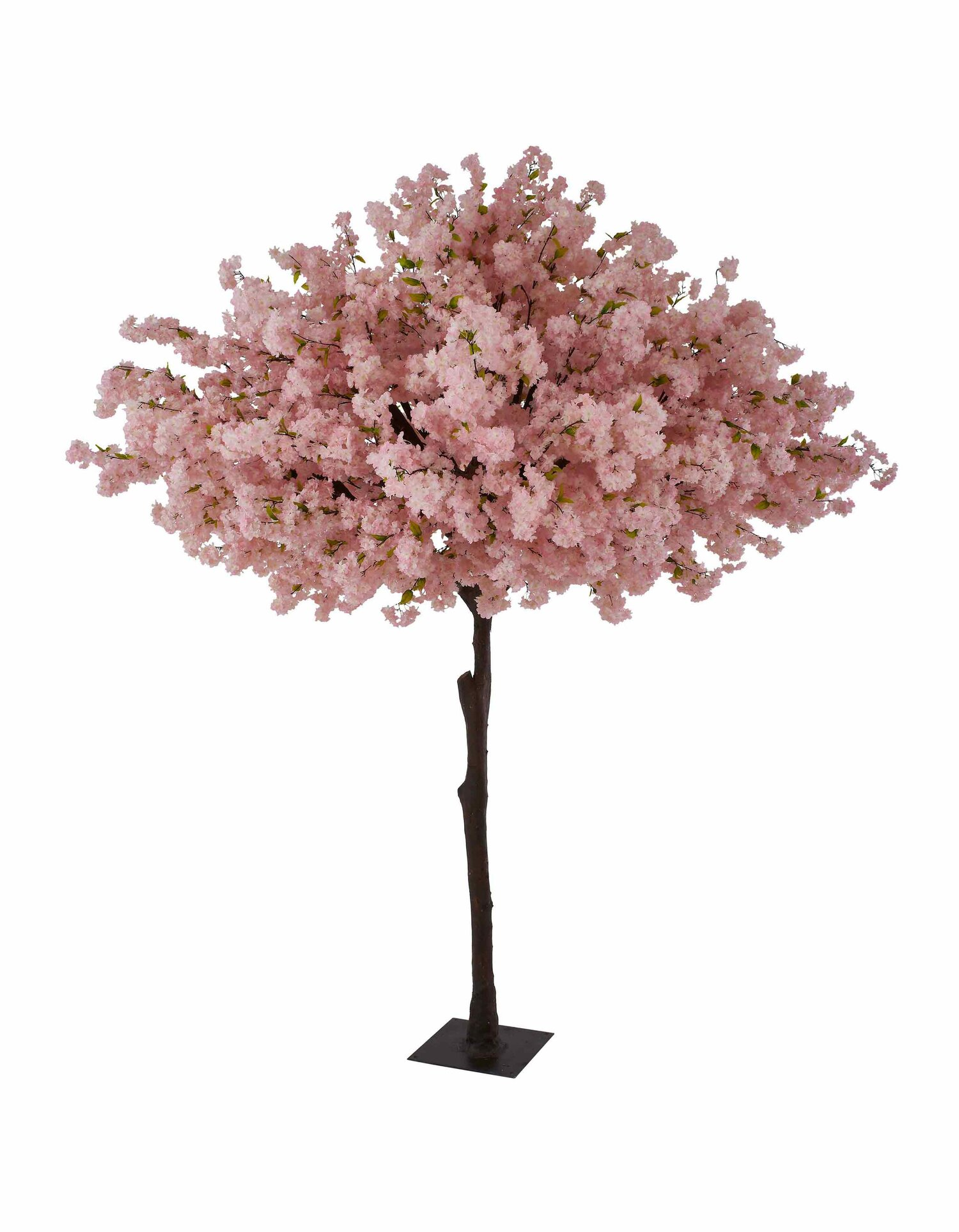 Tree Hire Cherry Blossom Trees For Hire
