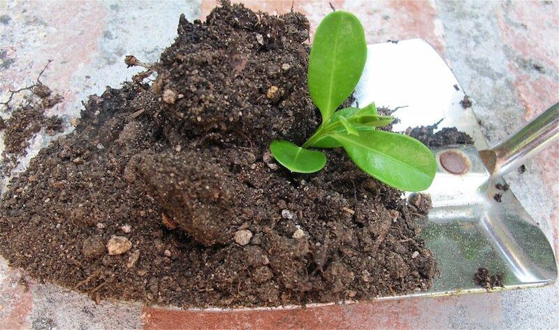 Garden soil newurbanhabitat.com