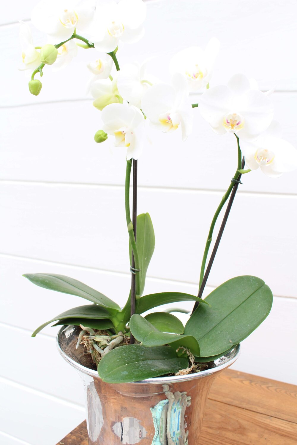 Orchid Succulent Ivy Arrangment My Soulful Home