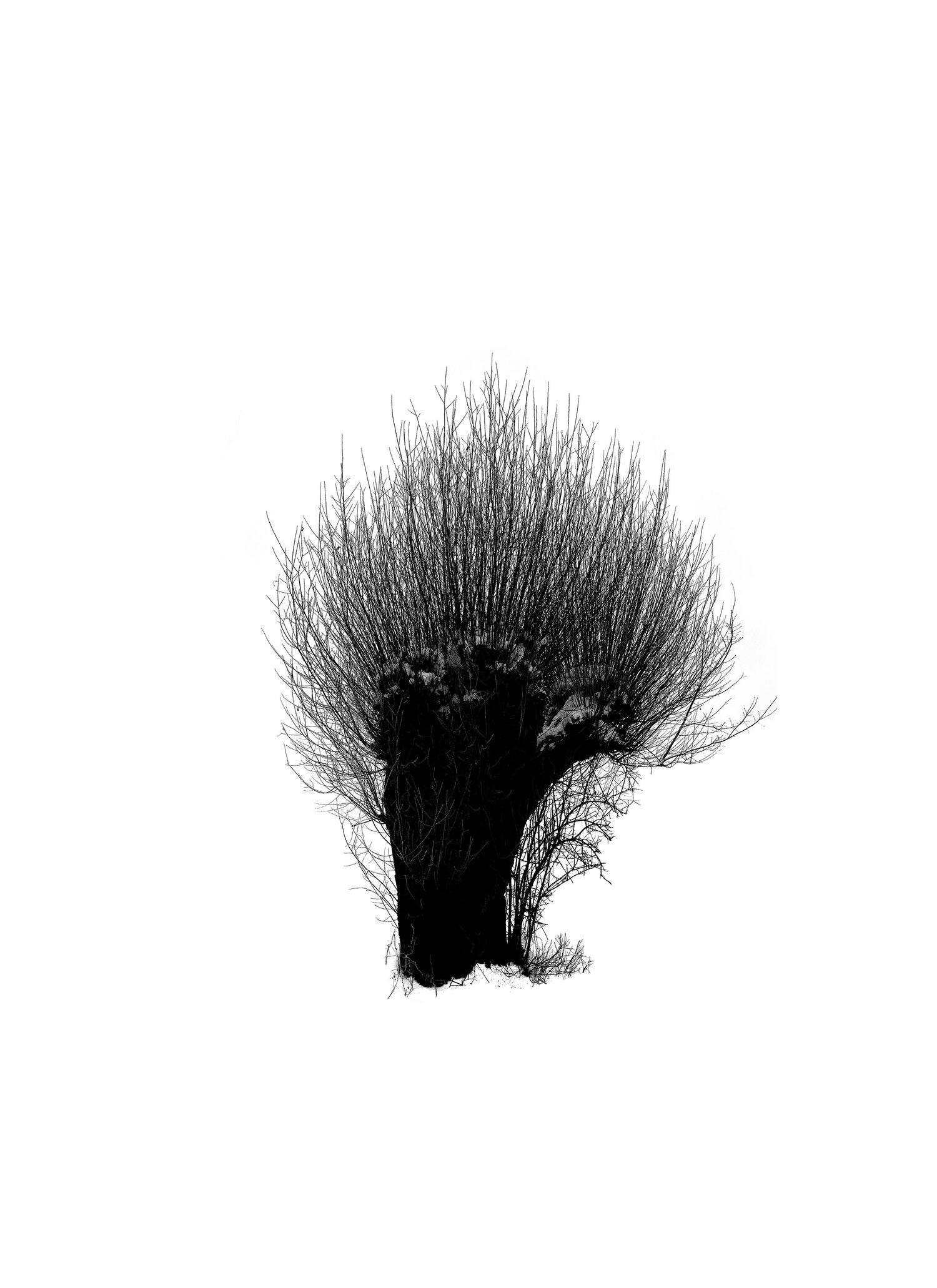 Tree-on-Life Gro/ße Gr/ö/ße 16 9 Faltbare Design-Hauptprojektionsfl/äche Weiche Polyester-Filmtheater-Film-Videoleinwand im Freien f/ür Projektor