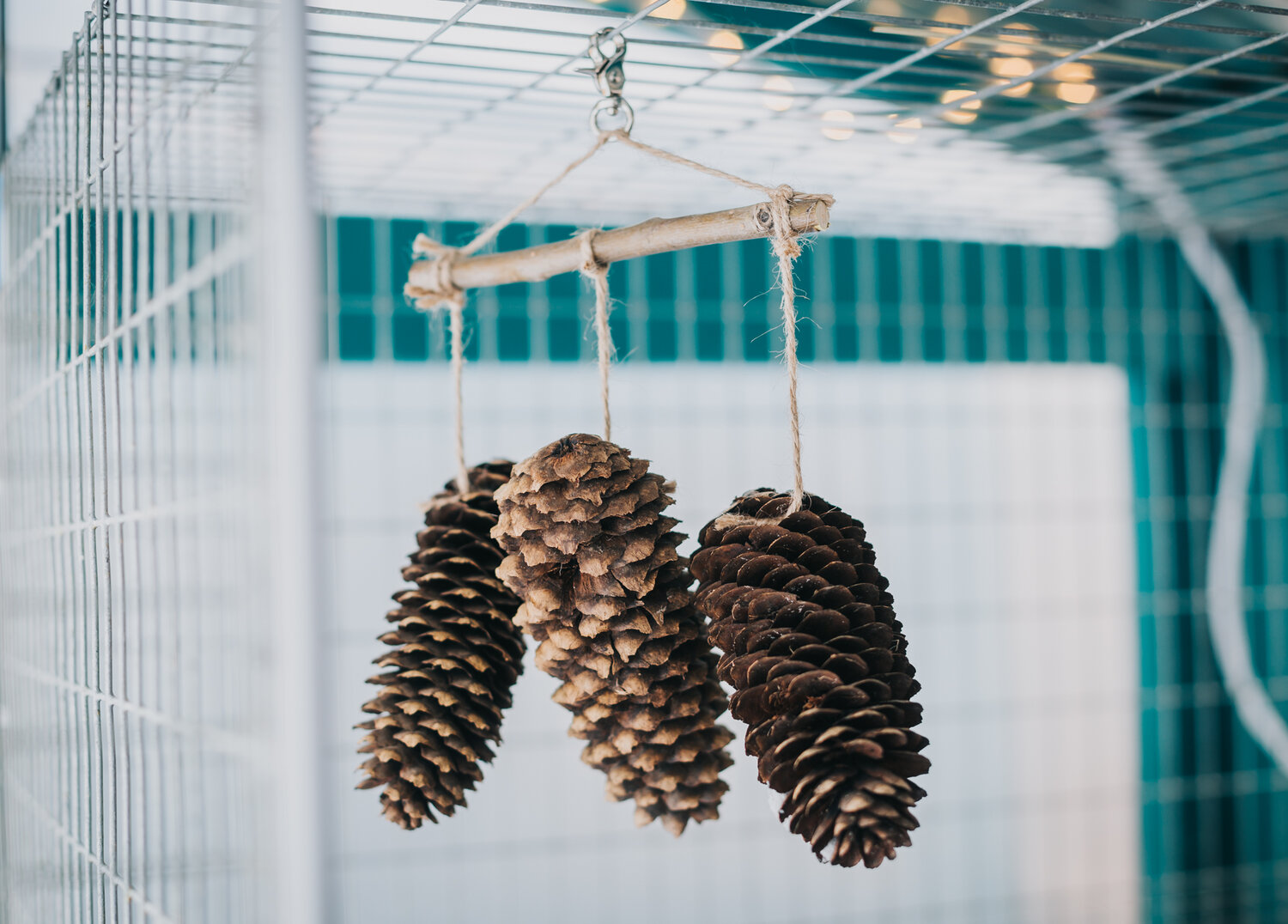 DIY Pinecone Mobile Toys for Rabbits — Teal Stone Homestead