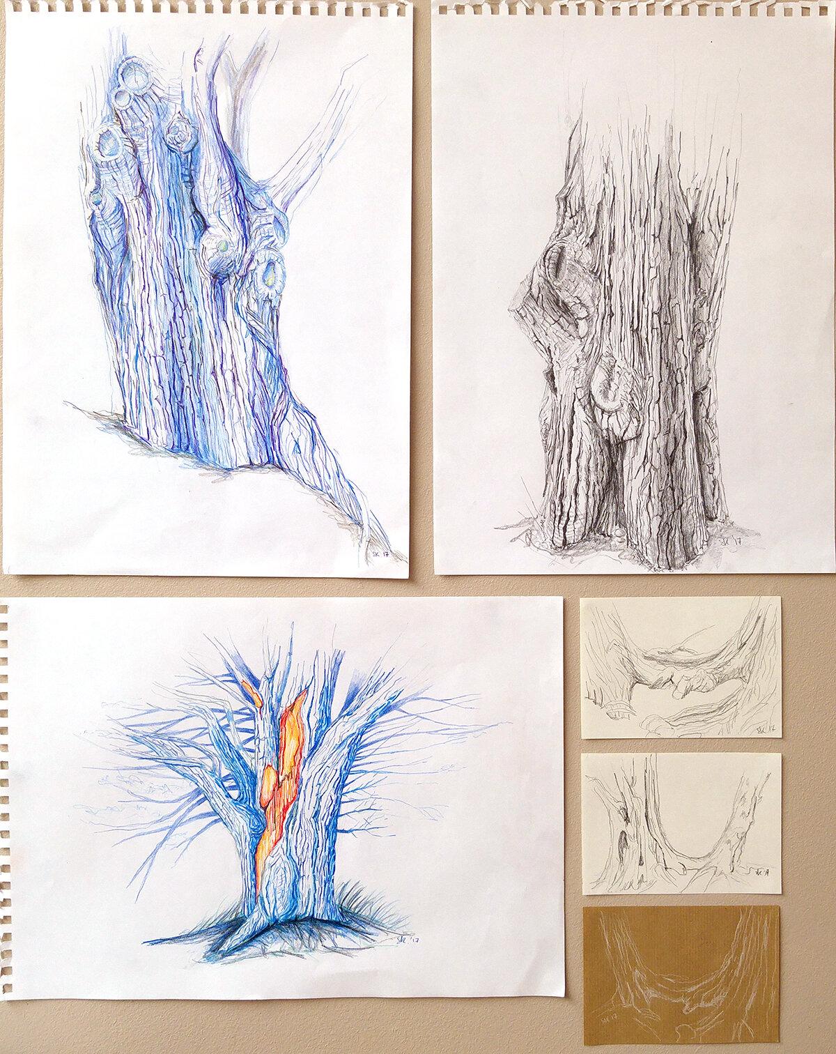 树木研究,2017年6月,史蒂芬妮·基尔加斯特(StéphanieKilgast)