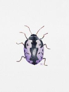 Caligrapha Scaralis,第2天,每日昆虫艺术挑战赛,水彩画,2018年,斯特凡妮·基尔加斯特(StéphanieKilgast)