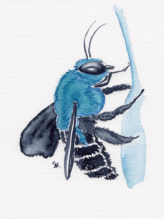 第25天,蓝色木匠蜜蜂,日常昆虫绘画,纸上水彩,斯蒂芬妮·基尔加斯特