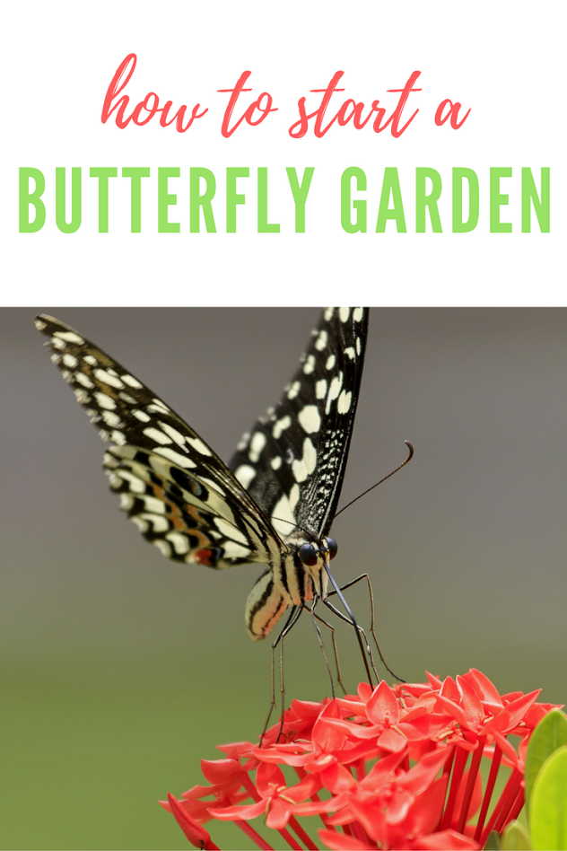 Create an environment for those pollinators and plant a butterfly garden!