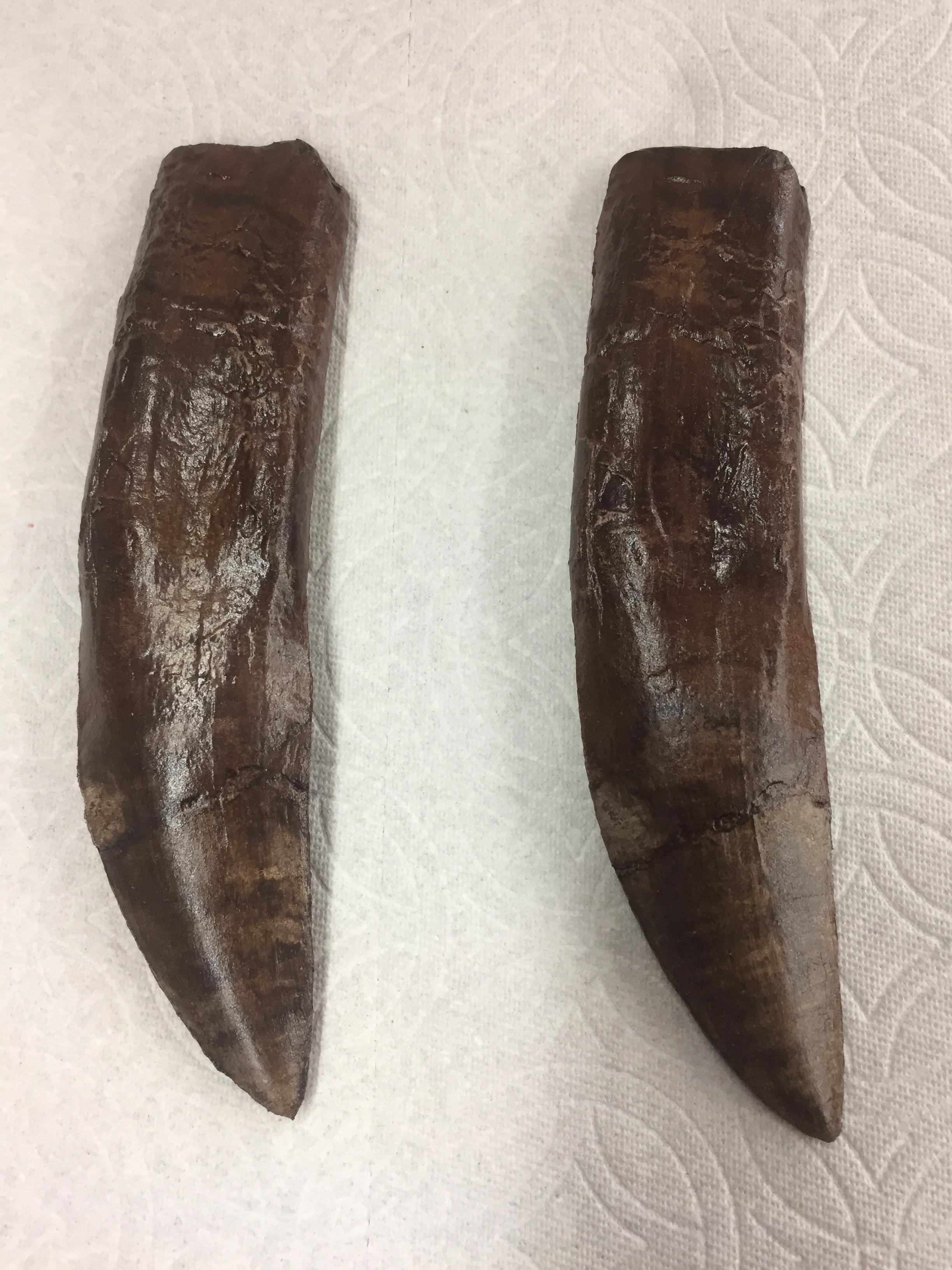 Foam Rubber Dinosaur Teeth