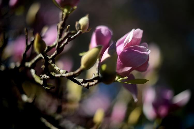 130131flowers1.jpg