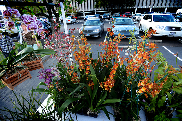 130401orchids2.jpg
