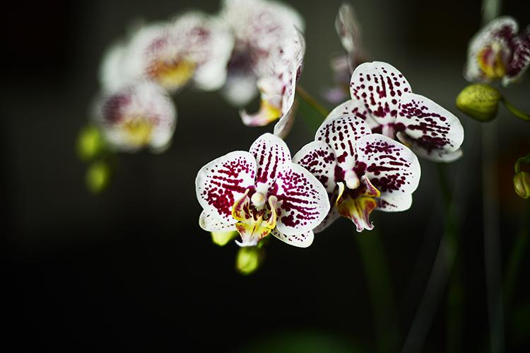 130401orchids5.jpg