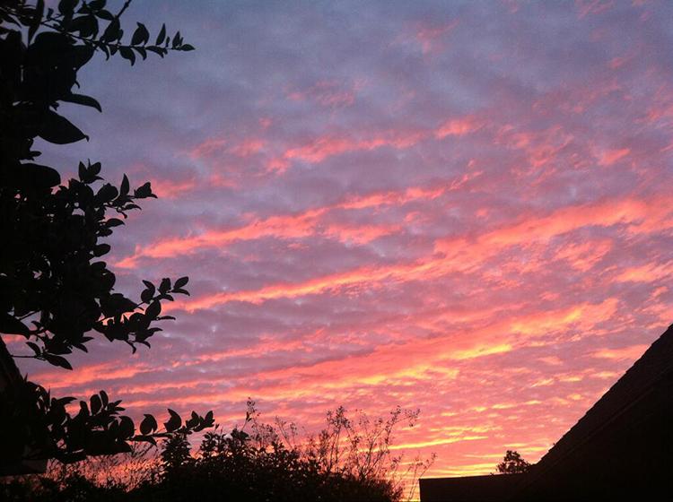 """""""pink"""" by  jodi byerly  (houston, texas, usa)"""
