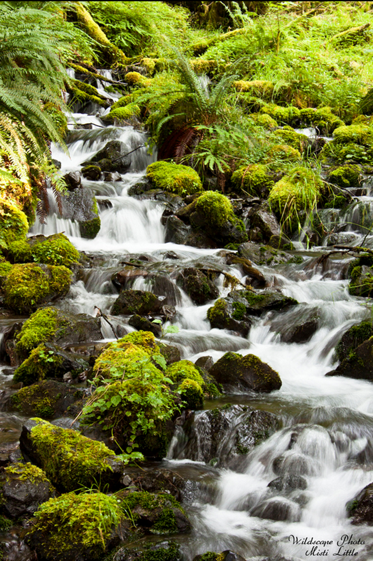 """mineral creek falls"" by  misti little  (hoh rainforest, olympic national park, washington, usa)"