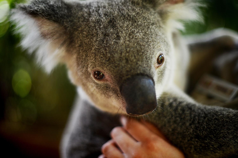 australia06.jpg