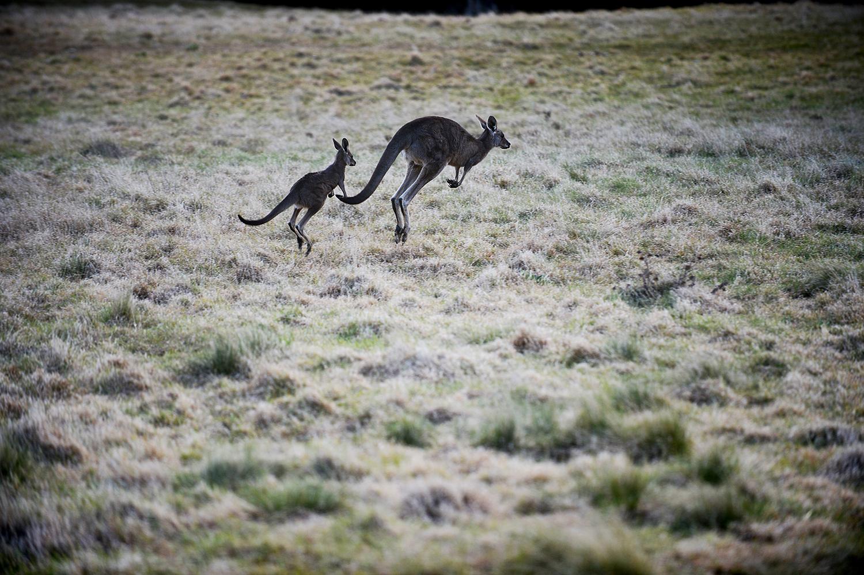 australia19.jpg