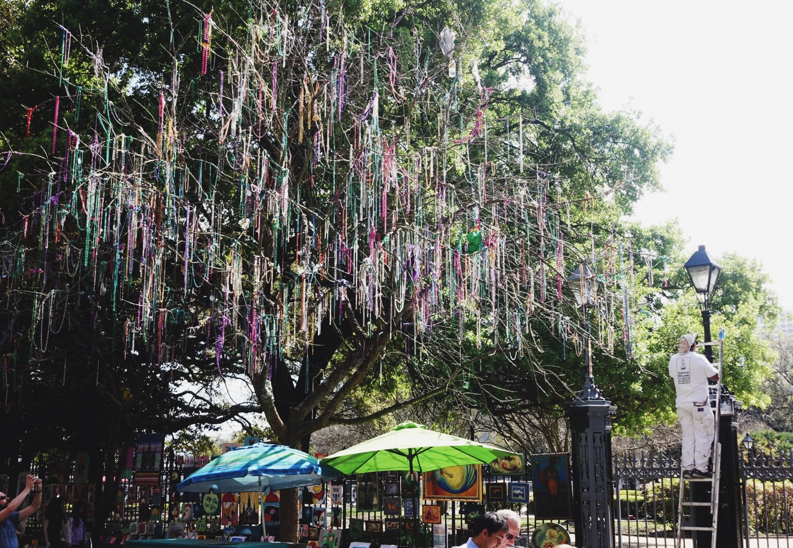 In New Orleans, even the trees wear beads.