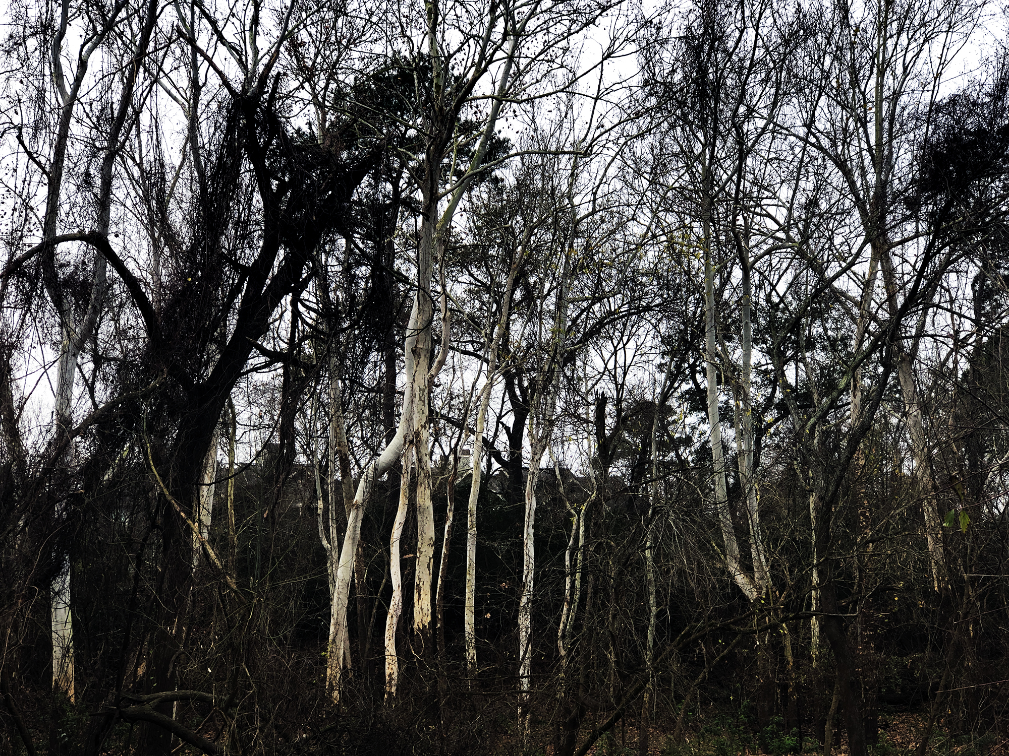A walk in the woods, Wednesday, January 16, 2019.