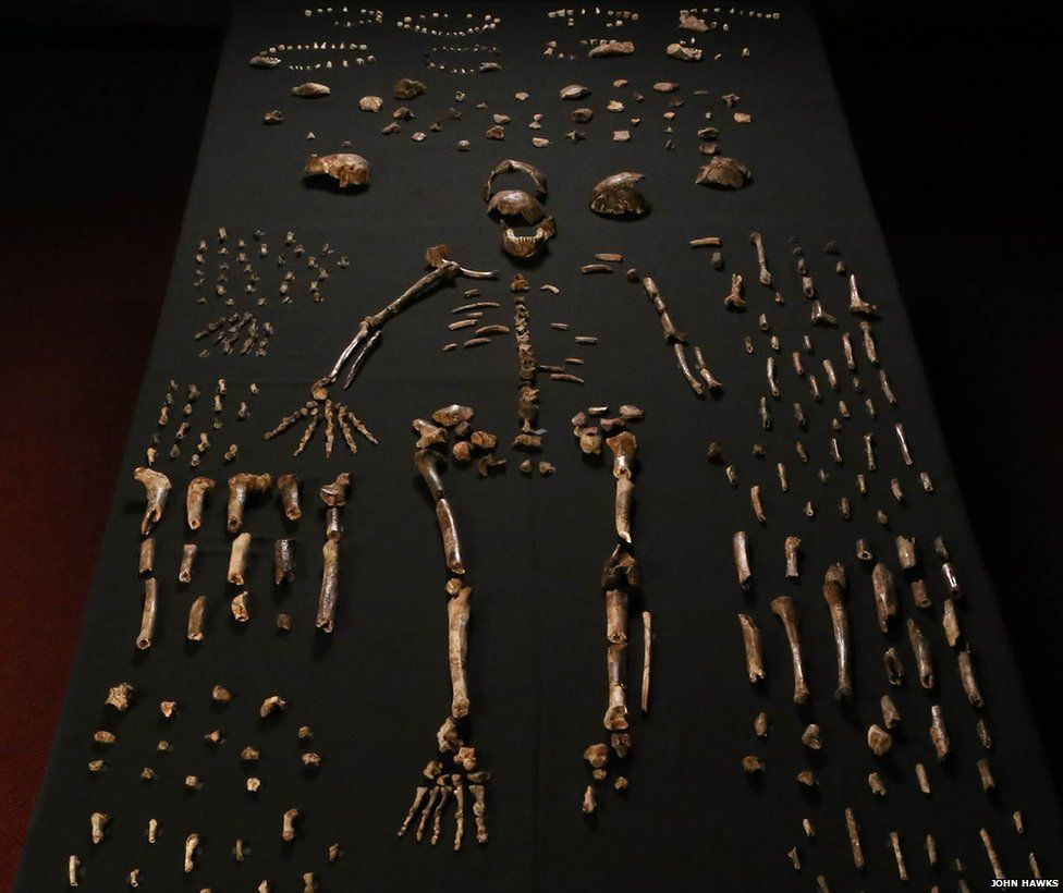 Homo Naledi has a mixture of primitive and more modern features.