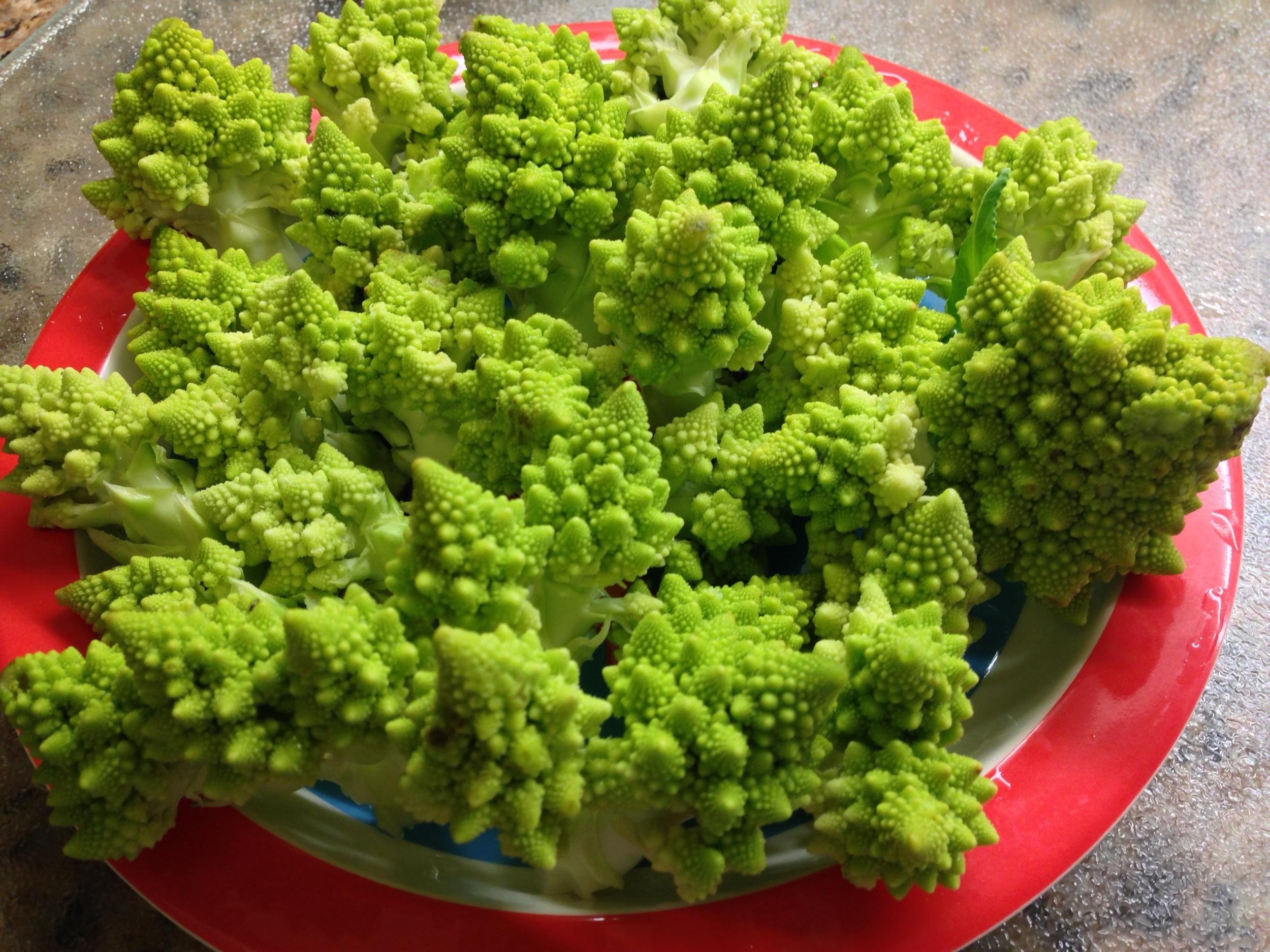 Roman cauliflower, aka Romanesco