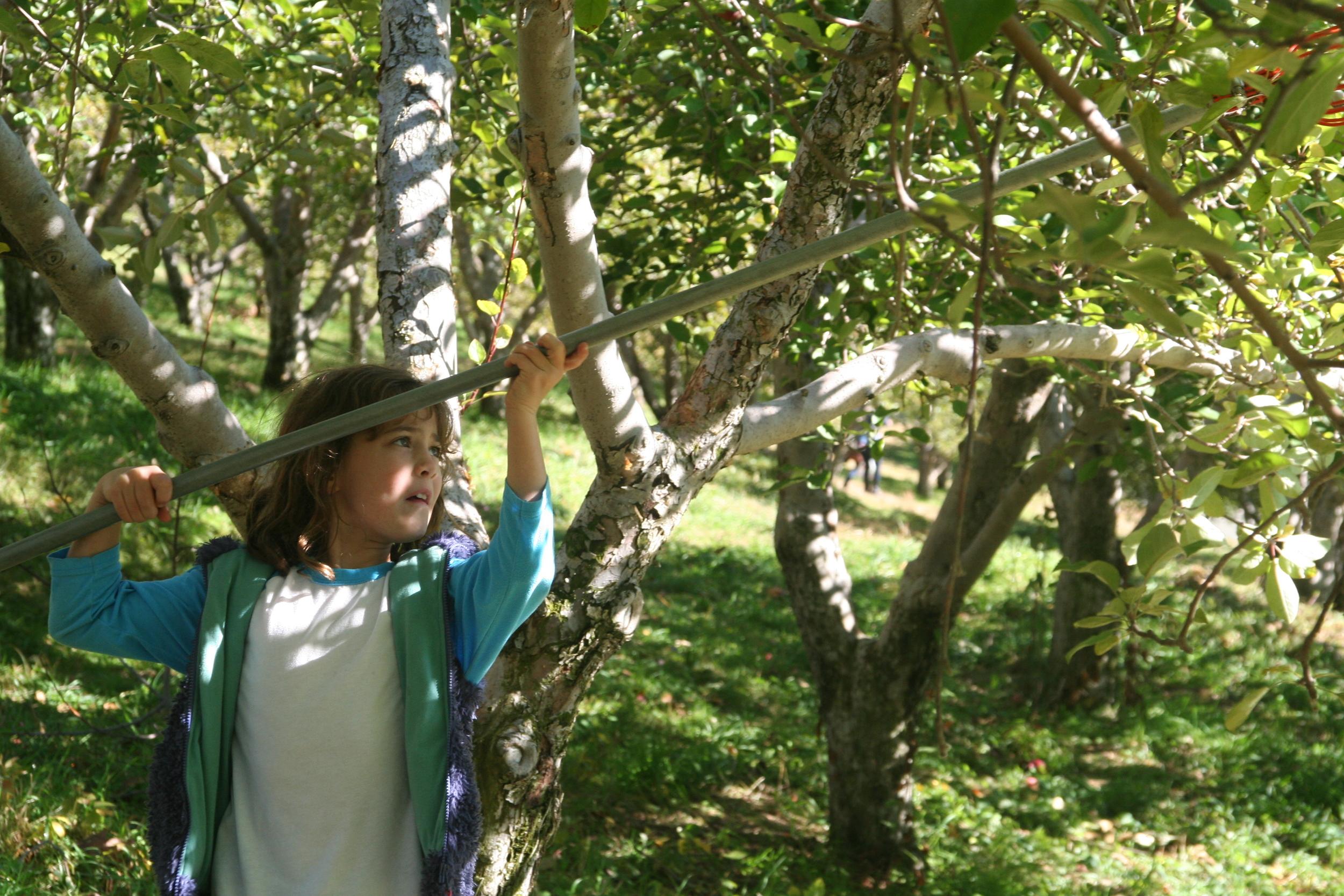 apple picking 2014