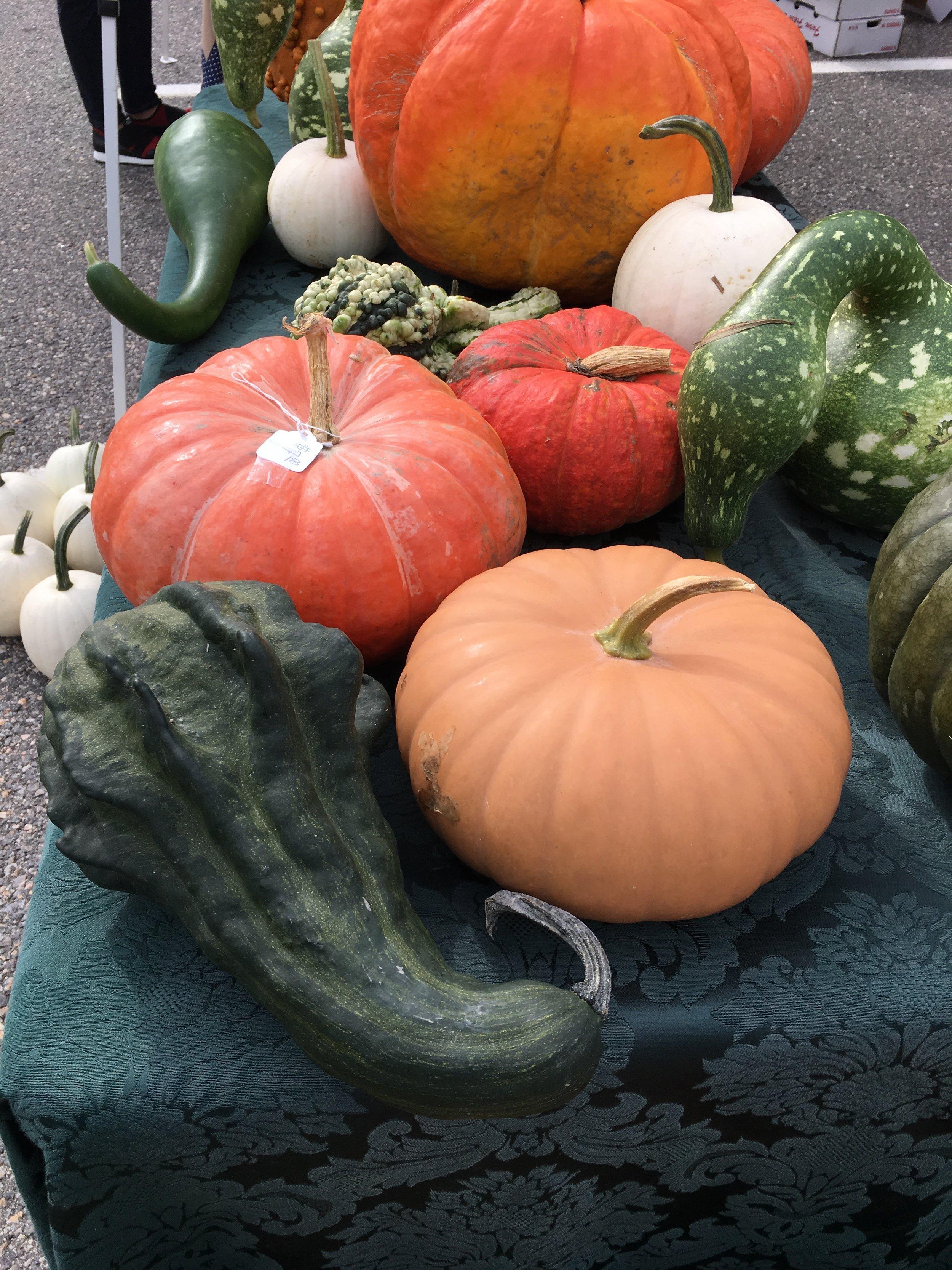 farmers market squash