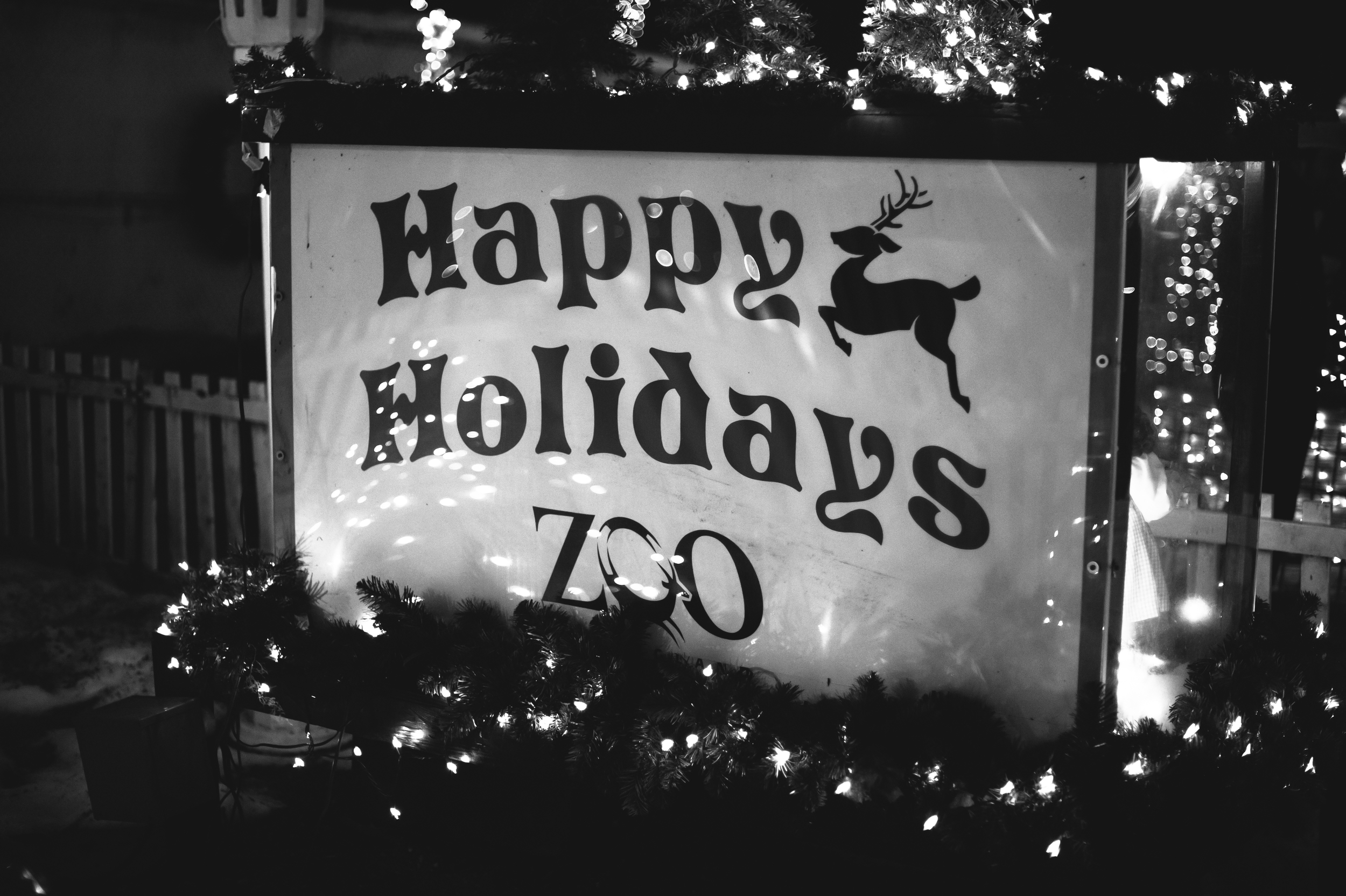 Holiday Lights at Stone Zoo