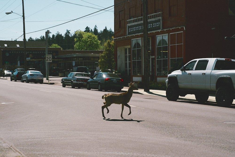 Silverton-Oregon-Frank-Lloyd-Wright 012.jpg