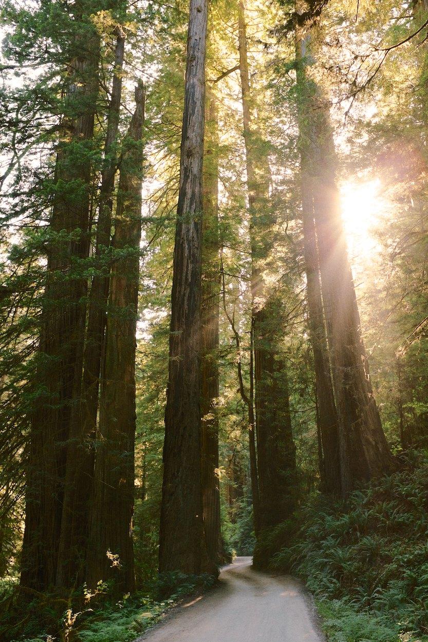 Redwood-Trees 002.jpg