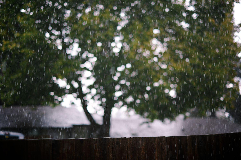 2013-09-30-Foggy Morning-059.jpg