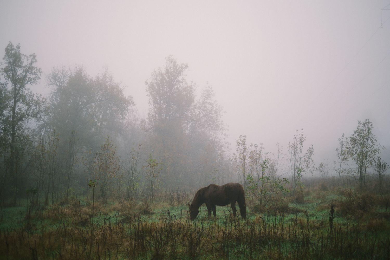 2013-10-03-Foggy Morning-078.jpg