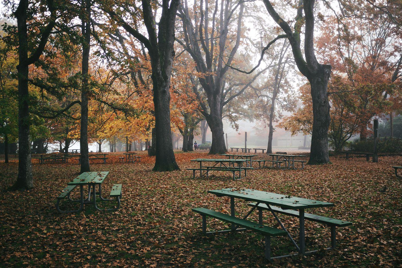 2013-10-23-oggy Morning -Bush Park-Downtown -Minto-102.jpg