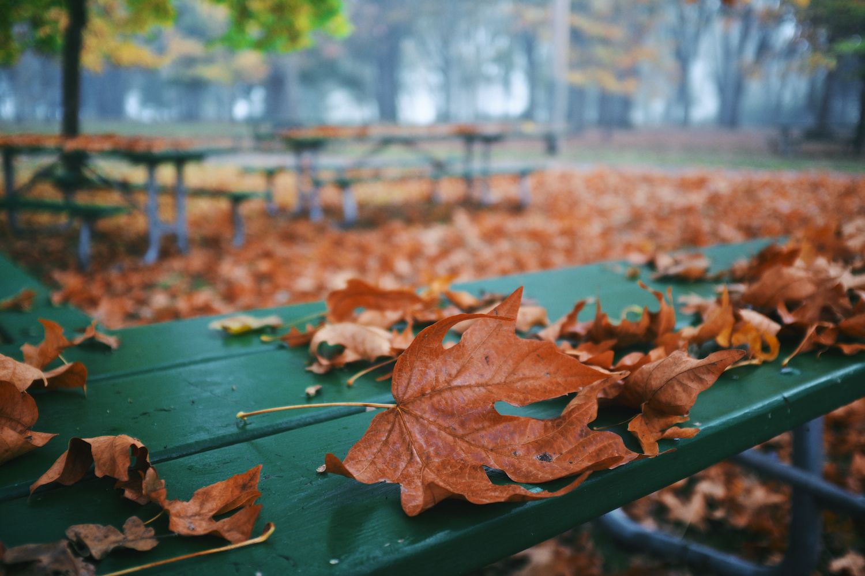 2013-10-23-oggy Morning -Bush Park-Downtown -Minto-105.jpg
