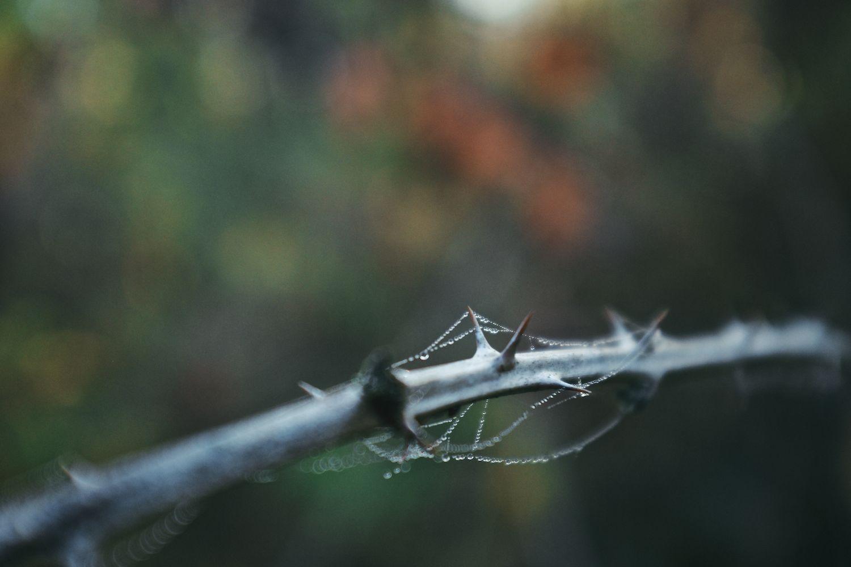 2013-10-23-oggy Morning -Bush Park-Downtown -Minto-175.jpg