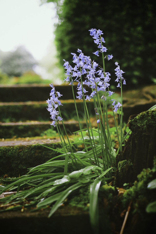 2014-04-25--Deepwood Gardens--035.jpg