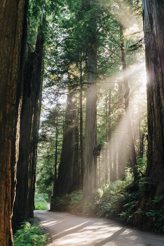 2013-07-04-SOR Redwoods & Crater Lake-077.jpg