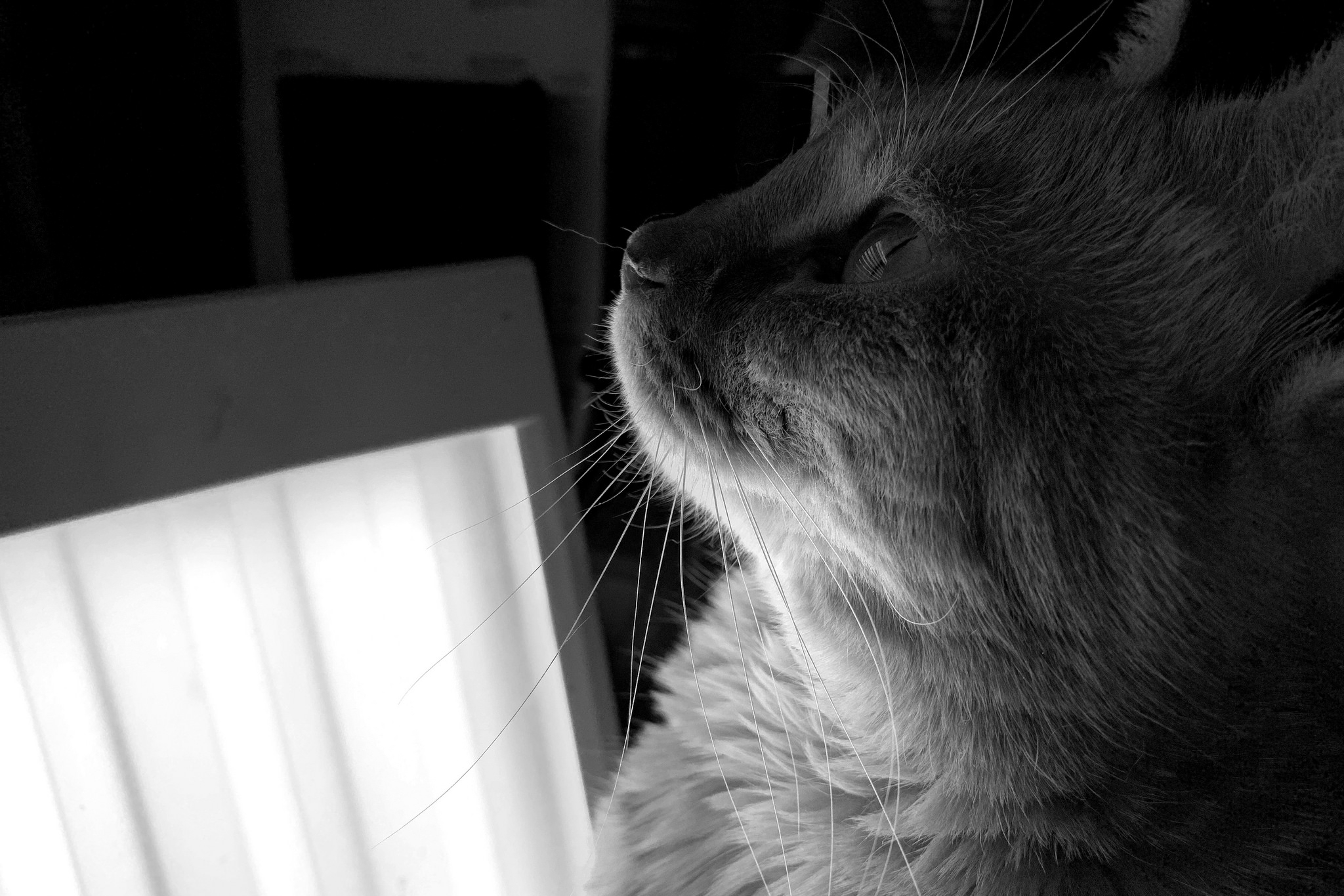 a kitty in front of a light therapy lamp
